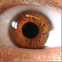 eye 11