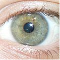 eye 5